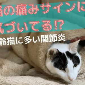 猫の痛みサインに気付いてる?【高齢猫に多い関節炎】