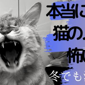 冬でも油断禁物!【本当にあった猫のノミの怖い話】