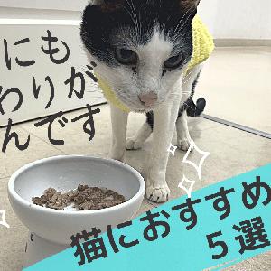 猫におすすめの食器 5選