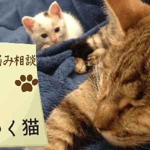 子猫のお悩み相談 #1【手に噛みつくのをやめさせたい】