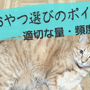 猫のおやつの適切な量・頻度