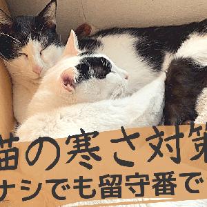 猫の寒さ対策【暖房ナシでも留守番できる?】