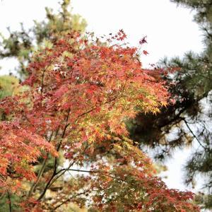 秋も終わる