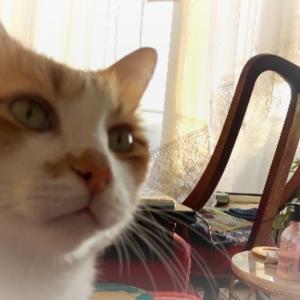(猫のナイトルーティン) 笑!うちの猫の場合 #猫動画 #猫 #ねこ