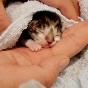 生後1日の捨て猫の赤ちゃん子猫を保護します。 #猫動画 #猫 #ねこ #猫好きさんと繋がりたい #癒やし