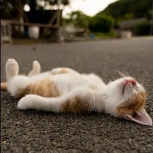 2020「かわいい猫」 笑わないようにしようとしてください – 最も面白い猫の映画 #35 #猫動画 #猫 #ねこ #猫好きさんと繋がりたい #癒やし