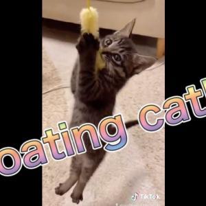 浮いちゃった猫(笑)ネコが釣れたー!Floating cat! I caught a cat! #猫動画 #猫 #ねこ #猫好きさんと繋がりたい #癒やし