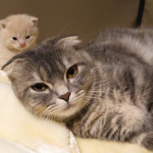 赤ちゃんがかわいくて仕方ない猫がかわいすぎた… kitten, 1month after birth #猫動画 #猫 #ねこ #猫好きさんと繋がりたい #癒やし