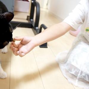 お姉ちゃんがおやつくれるってよ!(6匹の猫たち) #猫動画 #猫 #ねこ #猫好きさんと繋がりたい #癒やし