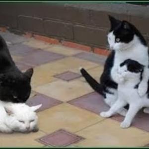 「絶対笑う」最高におもしろ 猫のハプニング, 失敗動画集・かわいい猫 #23 #猫動画 #猫 #ねこ #猫好きさんと繋がりたい #癒やし
