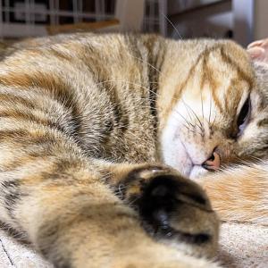 それでも動かない猫!(笑)♥ #猫動画 #猫 #ねこ #猫好きさんと繋がりたい #癒やし