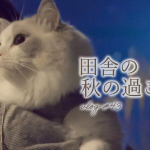 【田舎暮らし】湧き水で作る栗ごはん|ラグドール猫と秋の味覚|#43 #猫動画 #猫 #ねこ #猫好きさんと繋がりたい #癒やし