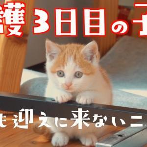 保護して3日目の可愛い子猫がこちらですw【保護猫】 #猫動画 #猫 #ねこ #猫好きさんと繋がりたい #癒やし