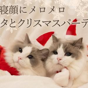 かわいい猫サンタへクリスマスディナーをプレゼント|ラグドール猫 #55 #猫動画 #猫 #ねこ #猫好きさんと繋がりたい #癒やし