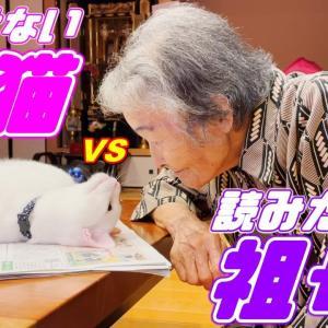 意地でもおばあちゃんに新聞を読ませない弟猫…笑[白猫のトコちゃん] #猫動画 #猫 #ねこ #猫好きさんと繋がりたい #癒やし