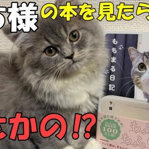 【スコティッシュフォールド子猫】もちまる日記の写真集を見てたらヤキモチ妬いた猫・・・でも最後は!? #猫動画 #猫 #ねこ #猫好きさんと繋がりたい #癒やし