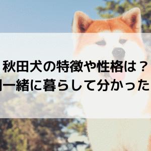 秋田犬の特徴や性格は?2年間一緒に暮らして分かったこと。