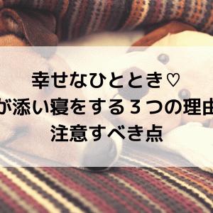 幸せなひととき♡犬が添い寝をする3つの理由と注意すべき点