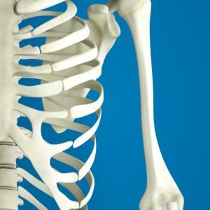 楽しく解剖生理を学ぼう