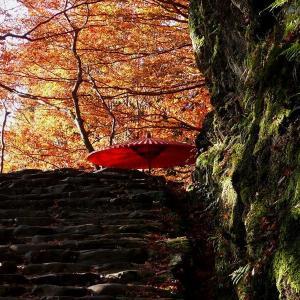 京都高尾 神護寺 2010/11/21