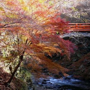 京都秋色(2) 西明寺 2010/11/21