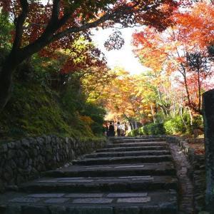 京都秋色(4) 嵯峨野 2010/11/21