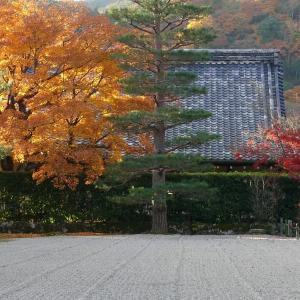 京都 天龍寺 2010/11/27