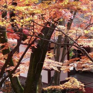 京都 常寂光寺 2010/11/27