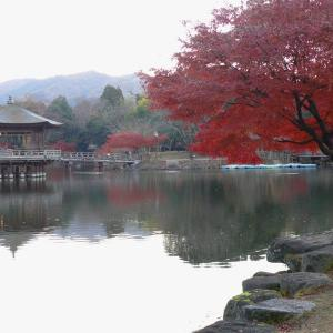 奈良 浮見堂・飛火野 2010/11/27