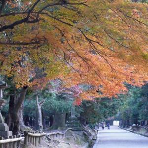 奈良 春日大社 2010/11/29