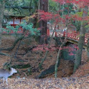 奈良 水谷神社・手向山八幡宮 2010/11/29