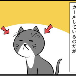 ヒゲはネコの大事なセンサー