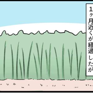 今だ終わらない竹の根の除去
