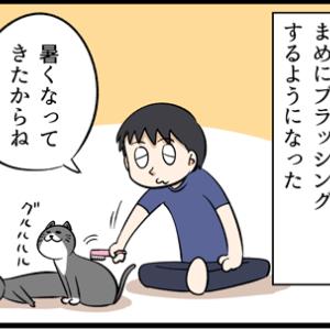 ネコのブラッシングを念入りにしてたら