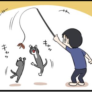 ネコのテンションが下がる時