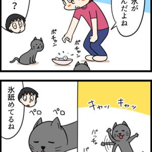 夏なのでネコに氷をあげてみた