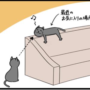 ネコの親切の押し売り