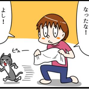 どうした!?突然ネコが威嚇を・・・