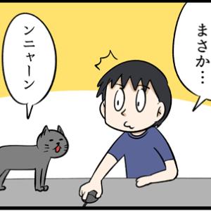 ネコの冬の定位置