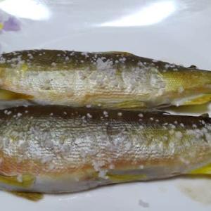 レクチンフリー鮎の塩焼き
