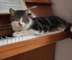 下手でも楽しい【おうちでピアノ】2回目 ルパン三世のテーマ'80