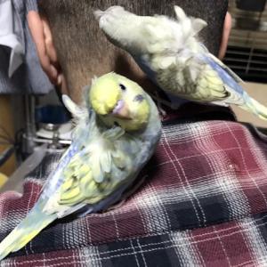 今日の放鳥