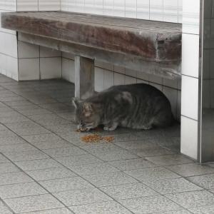 尾道散歩~千光寺公園②