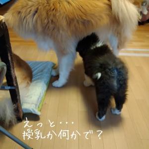 ママ、始めました?