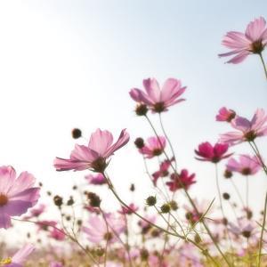 *自然と触れ合う機会が増えると幸福度も上がる
