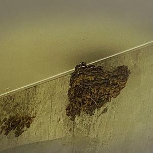 街中にツバメの巣が…☆