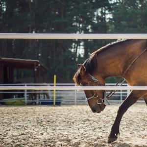 歌手のMISIAさんが落馬で背骨を骨折、全治6週間の大怪我。調教馬でもリスクはつきもの!?