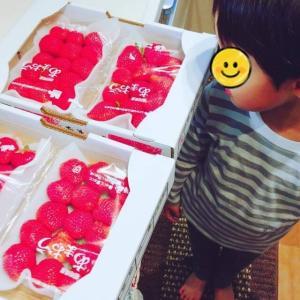 【ふるさと納税】今年もリピート!いちごの王様あまおう|福岡県久留米市