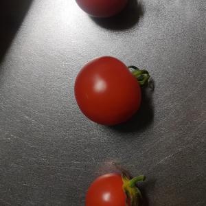 トマトの食べ比べ(私の好きな季節になりました)