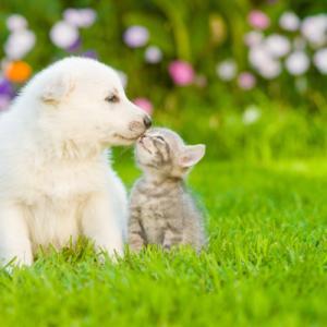 【DOQAT:ドキャット】で愛犬・愛猫の悩みを解決!